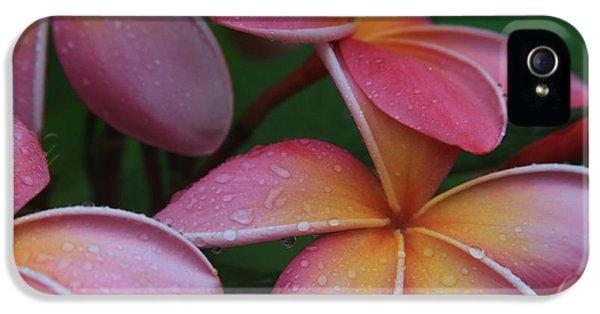 He Pua Laha Ole Aloha Hawaii IPhone 5 Case