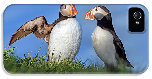 Puffin iPhone 5 Case - He Went That Way by Betsy Knapp