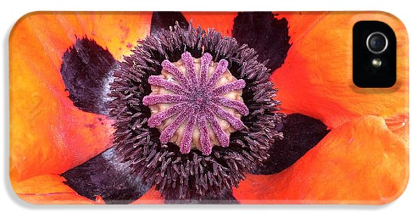 iPhone 5 Case - Heart Of A Poppy by Orphelia Aristal