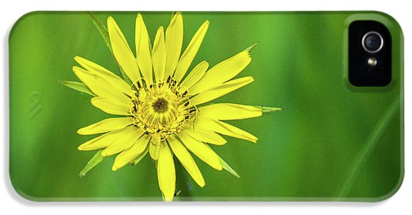 IPhone 5 Case featuring the photograph Hello Wild Yellow by Bill Pevlor
