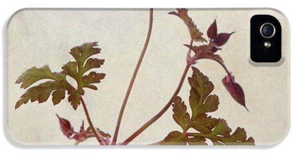 Green iPhone 5 Case - Herb Robert - Wild Geranium  #flower by John Edwards