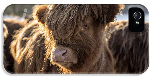 Highland Baby Coo IPhone 5 Case by Jeremy Lavender Photography