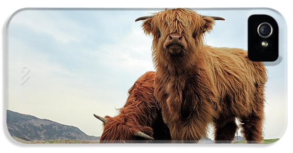 Cow iPhone 5 Case - Highland Cow Calves by Grant Glendinning