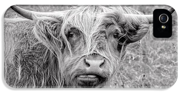 Highland Cow IPhone 5 Case by Jeremy Lavender Photography