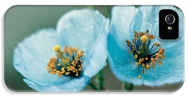 Himalayan Blue Poppy IPhone 5 Case by American School