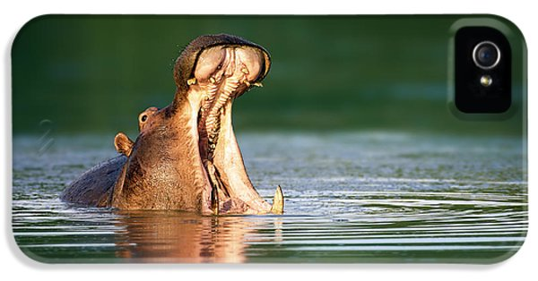Hippopotamus IPhone 5 Case by Johan Swanepoel