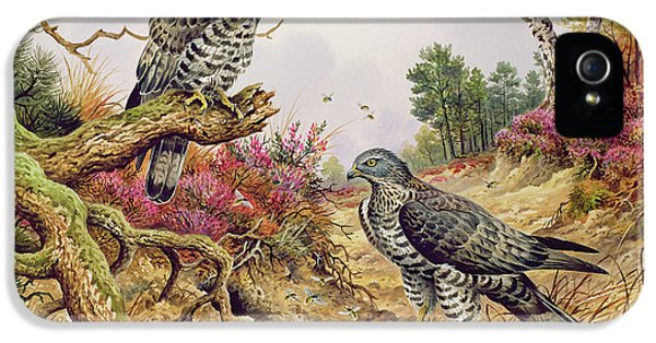 Honey Buzzards IPhone 5 / 5s Case by Carl Donner