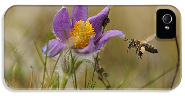 Honeybee At Pasque Flower IPhone 5 Case by David & Micha Sheldon