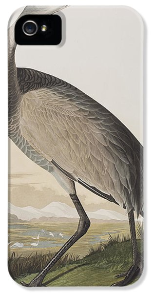 Hooping Crane IPhone 5 / 5s Case by John James Audubon