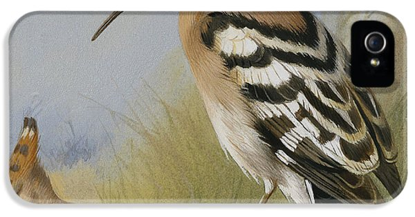 Hoopoes IPhone 5 / 5s Case by Archibald Thorburn