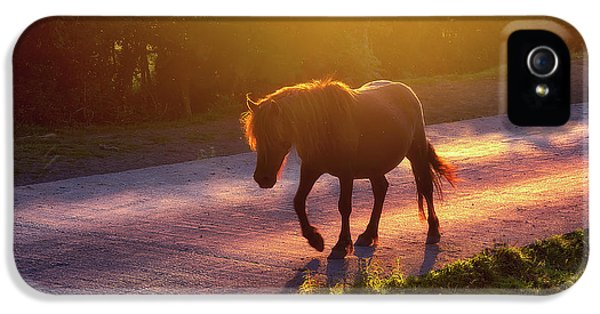 Horse iPhone 5 Case - Horse Crossing The Road At Sunset by Mikel Martinez de Osaba