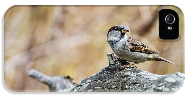 House Sparrow IPhone 5 Case by Torbjorn Swenelius