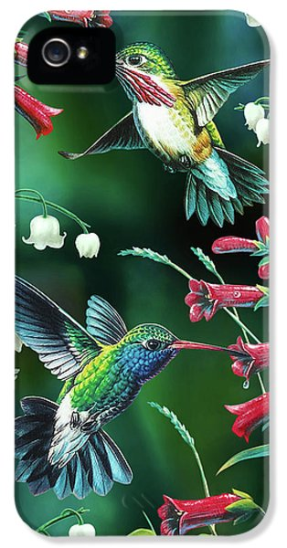 Songbird iPhone 5 Cases - Humming Birds 2 iPhone 5 Case by JQ Licensing