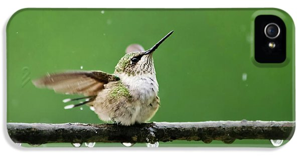 Hummingbird In The Rain IPhone 5 / 5s Case by Christina Rollo
