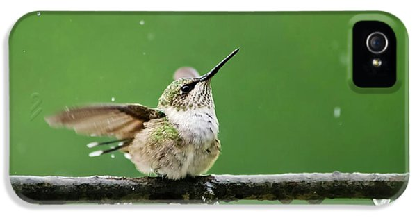 Hummingbird In The Rain IPhone 5 Case by Christina Rollo