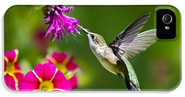 Hummingbird With Flower IPhone 5 Case by Christina Rollo