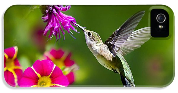 IPhone 5 Case featuring the photograph Hummingbird With Flower by Christina Rollo