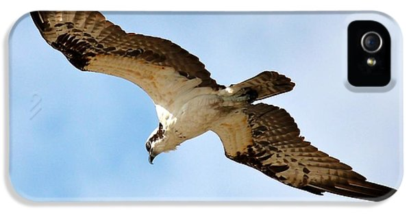 Hunter Osprey IPhone 5 Case by Carol Groenen