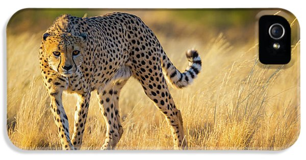 Hunting Cheetah IPhone 5 Case