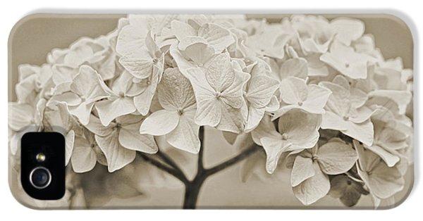 Hydrangea Flowers Vintage Ivory IPhone 5 Case by Jennie Marie Schell