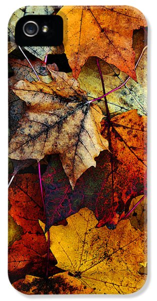 I Love Fall 2 IPhone 5 Case