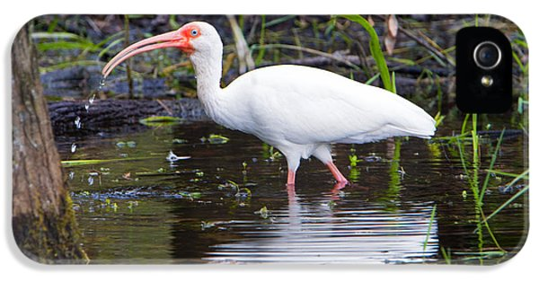Ibis Drink IPhone 5 Case by Mike Dawson