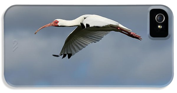 Ibis In Flight IPhone 5 / 5s Case by Carol Groenen