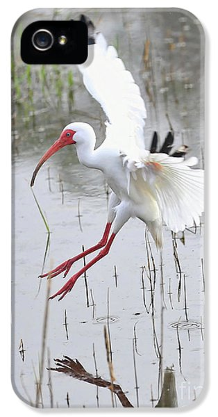 Ibis Soft Water Landing IPhone 5 Case by Carol Groenen