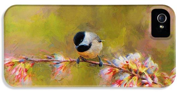 Impressionist Chickadee IPhone 5 Case by Jai Johnson