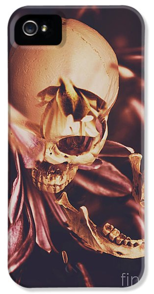 Orchid iPhone 5 Case - In Contrasts Of Soul Growth by Jorgo Photography - Wall Art Gallery