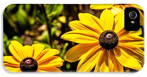 Indian Summer Gloriosa Daisy IPhone 5 Case