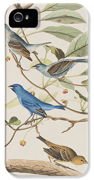 Indigo Bird IPhone 5 Case by John James Audubon