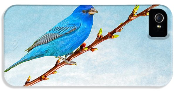 Bunting iPhone 5 Case - Indigo Bunting by Laura D Young
