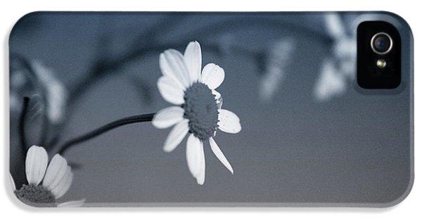 Daisy iPhone 5 Case - Indigo Daisies 1- Art By Linda Woods by Linda Woods