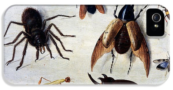 Insects, 1660 IPhone 5 Case