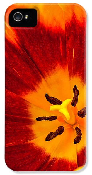 Inside Red And Yellow Tulip IPhone 5 Case by Garry Gay
