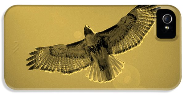 Hawk iPhone 5 Cases - Into the Light - Sepia iPhone 5 Case by Carol Groenen
