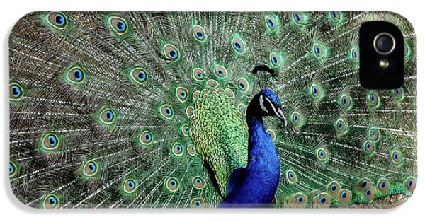 Iridescent Blue-green Peacock IPhone 5 Case