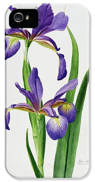 Iris Monspur IPhone 5 Case by Anonymous