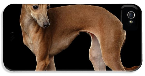 Dog iPhone 5 Case - Italian Greyhound Dog Standing  Isolated by Sergey Taran