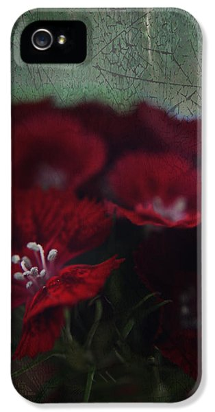 Stamens iPhone 5 Case - It's A Heartache by Laurie Search