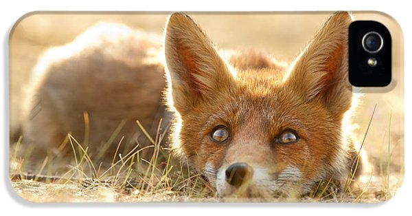 Little Fox Dreaming Of A Foxy Future IPhone 5 Case by Roeselien Raimond