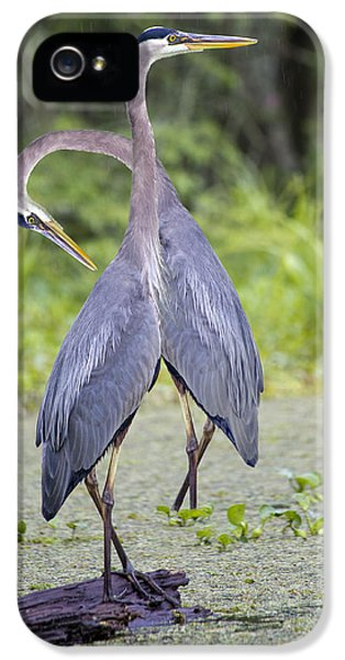 I've Got Your Back IPhone 5 Case by Betsy Knapp