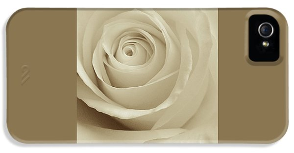 Ivory Rose IPhone 5 Case by Don Spenner