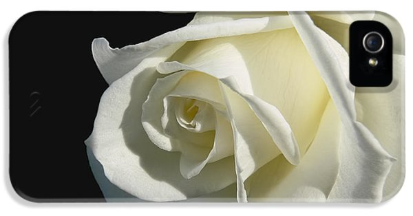 Ivory Rose Flower On Black IPhone 5 Case by Jennie Marie Schell