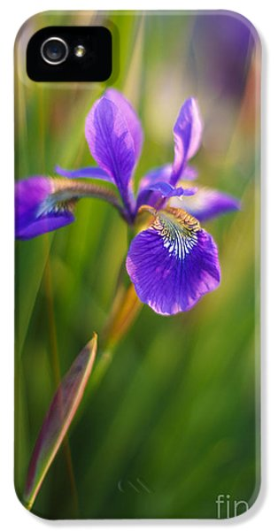 Japanese Iris Vibrant IPhone 5 Case by Mike Reid