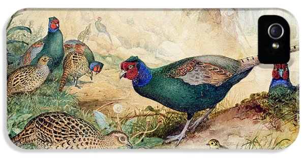 Japanese Pheasants IPhone 5 Case by Joseph Wolf