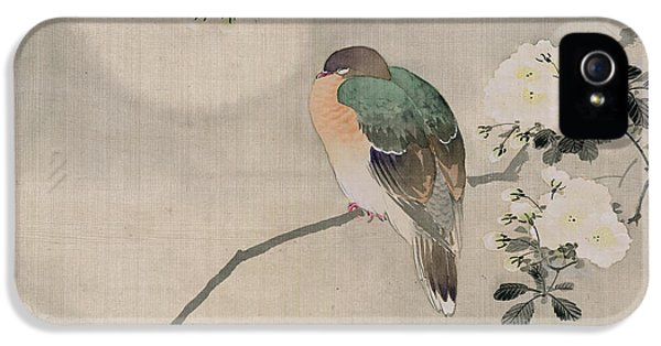 Japanese Silk Painting Of A Wood Pigeon IPhone 5 Case by Japanese School