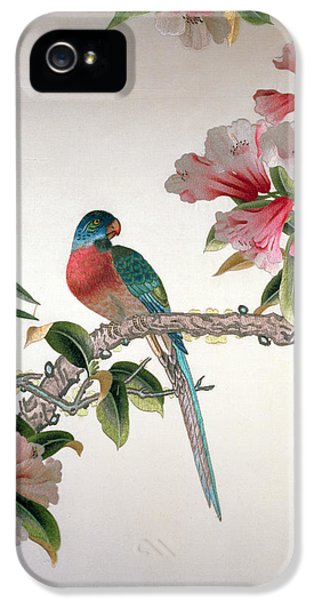 Jay On A Flowering Branch IPhone 5 / 5s Case by Chinese School
