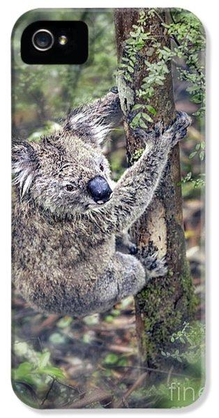 Koala iPhone 5 Case - Joyous Hangover by Evelina Kremsdorf